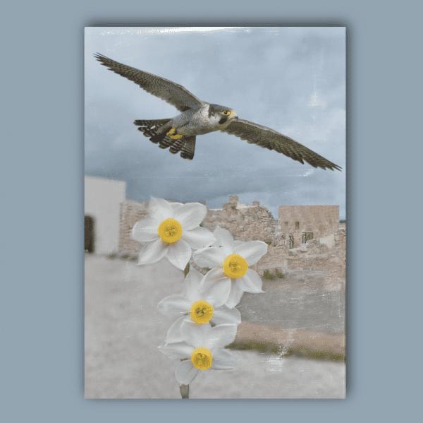ATTI E MEMORIE Vol. XII 2014 - 2017 - Congresso Internazionale Biodiversità, Mediterraneo, Società _ Retro