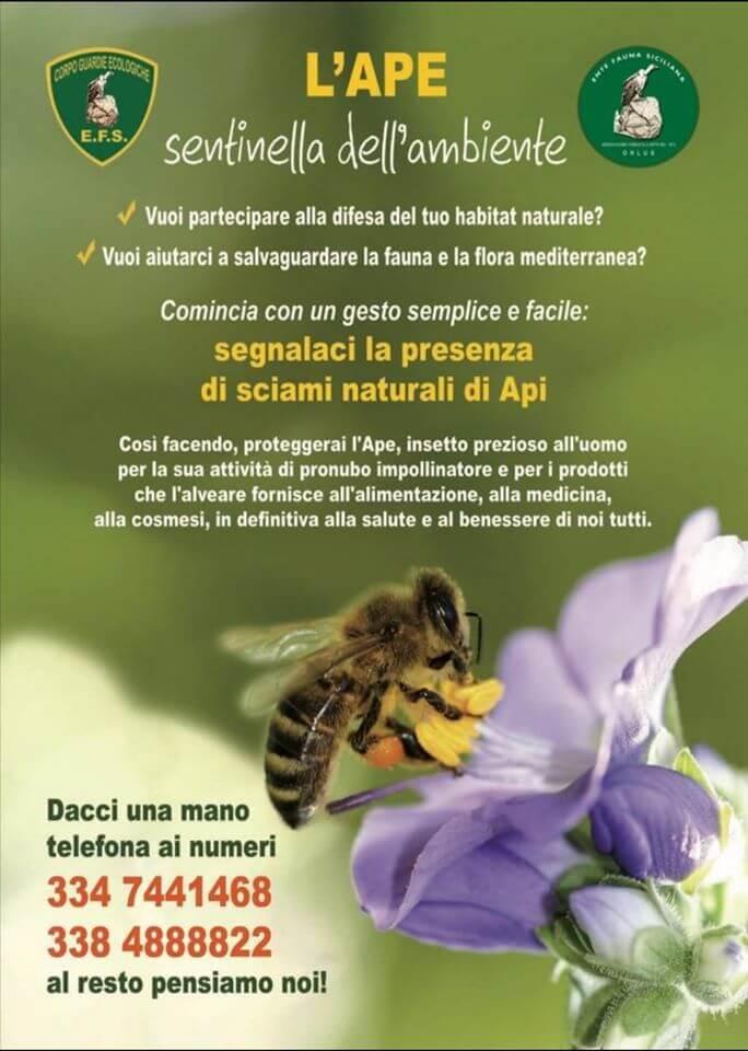 Locandina Ape Nera Siciliana