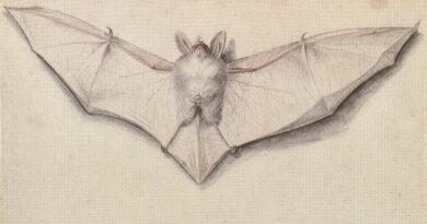 Coronavirus e pipistrelli: tra realtà e pregiudizi - di Giuseppe Sperlinga