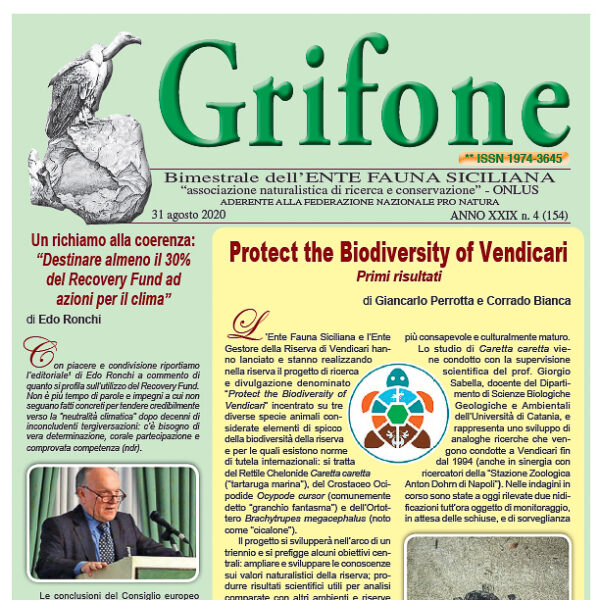 Grifone 154