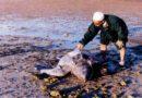 """Ricordi di vita: Io e la """"Caretta caretta"""" nell'isola di Djerba"""