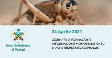Giornata di Formazione-Informazione Monotematica su Brachytrupes megacephalus